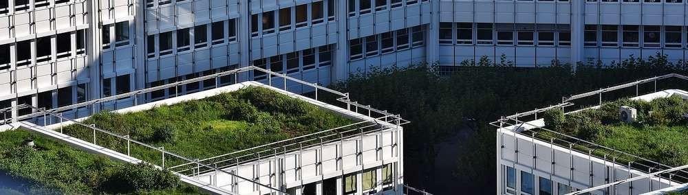 La toiture végétale pour votre construction de maison