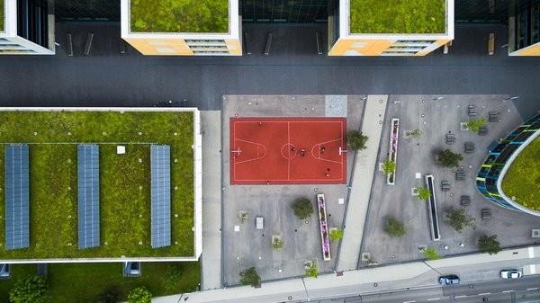 Construction de maison et toiture végétale : avantages et possibilités